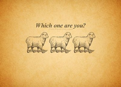 text, sheep, typography - related desktop wallpaper