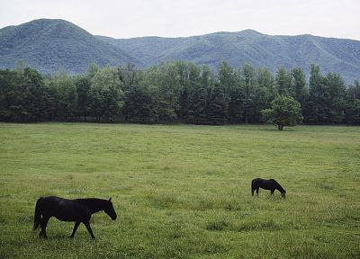 nature, forests, fields, horses, Tennessee, National Park, Great Smoky Mountains - random desktop wallpaper