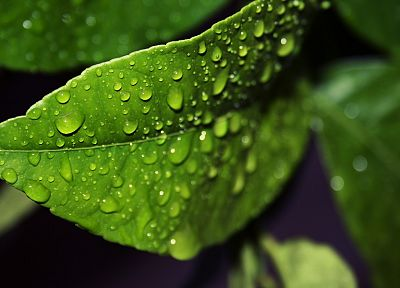 green, nature, leaves, water drops, macro - related desktop wallpaper