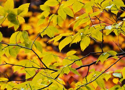 nature, leaf, trees, leaves, plants - desktop wallpaper