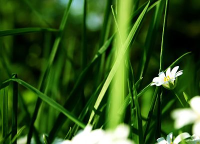 nature, flowers, grass, summer - related desktop wallpaper