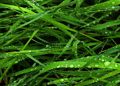nature, grass, water drops - random desktop wallpaper