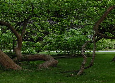 nature, trees, dual screen, multiscreen - desktop wallpaper