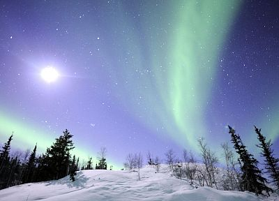 landscapes, snow, trees, aurora borealis - desktop wallpaper