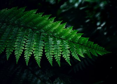 ferns - random desktop wallpaper