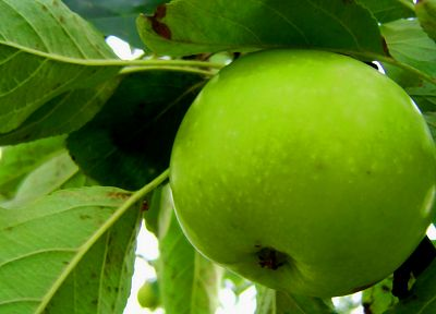 green, nature, fruits, macro, apples - random desktop wallpaper