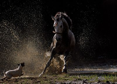 water, black, dark, animals, dogs, horses, running, mud, splashes - related desktop wallpaper