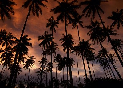 Hawaii, dreams, kauai, coconut, palm trees - related desktop wallpaper