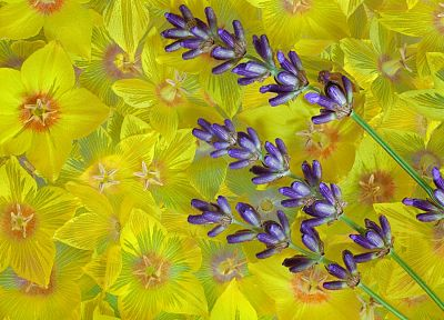 blossoms, lavender, yellow flowers - random desktop wallpaper