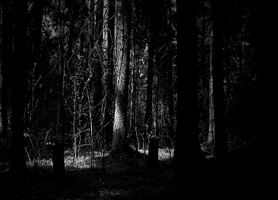 trees, dark, forests, grayscale, sunlight, monochrome - random desktop wallpaper