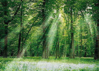 forests, sunlight, magical - random desktop wallpaper