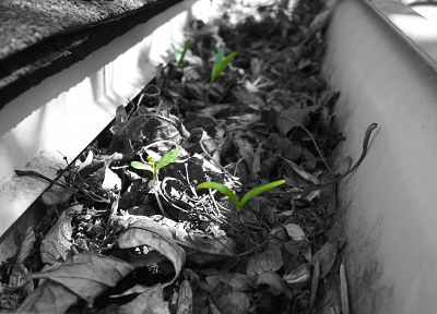 green, leaves, plants, selective coloring - random desktop wallpaper