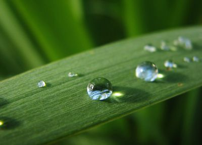 nature, leaves, water drops, macro, dew - related desktop wallpaper