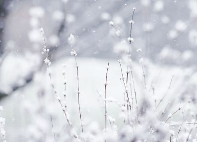 nature, winter, Wonderland - random desktop wallpaper