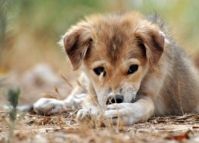 animals, dogs, puppies - related desktop wallpaper