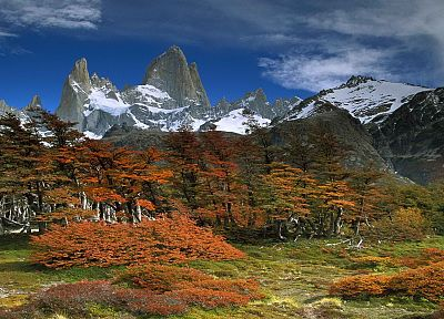 landscapes, trees, Argentina, beech, National Park, Mount - desktop wallpaper