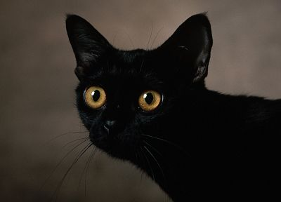 eyes, cats, animals, Black Cat, pets - related desktop wallpaper