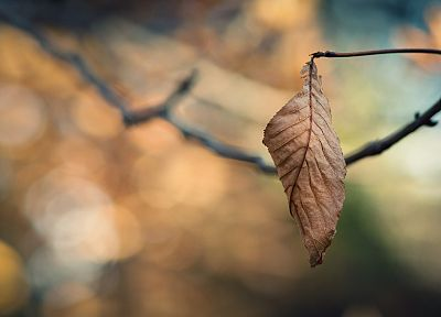 close-up, nature, autumn, leaves, macro, depth of field - related desktop wallpaper