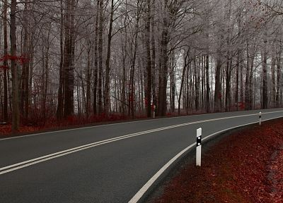 nature, autumn, forests, roads - related desktop wallpaper