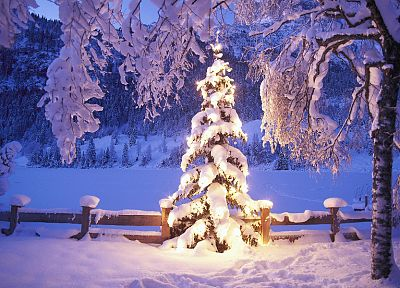 winter, snow, trees, lights, Christmas - desktop wallpaper
