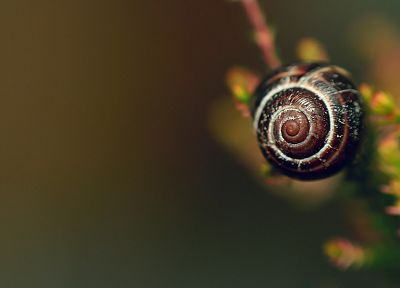 animals, snails, macro - desktop wallpaper