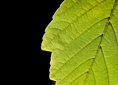 green, nature, leaves, macro, simple, black background - desktop wallpaper