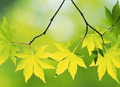 nature, leaves, depth of field - desktop wallpaper