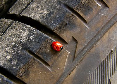tires, ladybirds - desktop wallpaper
