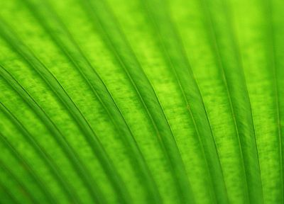 green, macro - random desktop wallpaper