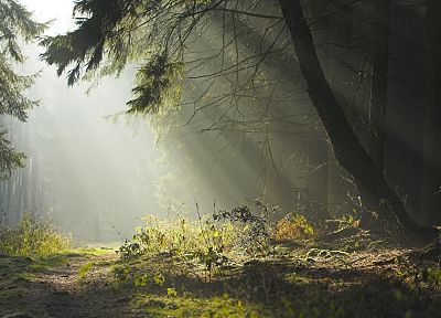 landscapes, trees, forests, paths, sunlight - related desktop wallpaper