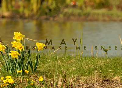 flowers, May, grass, depth of field, rivers - desktop wallpaper