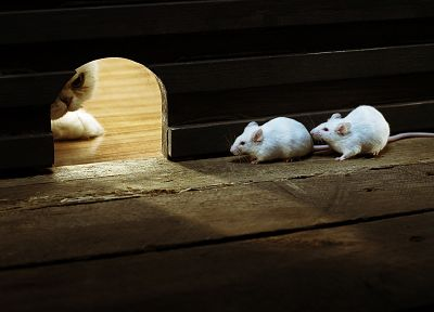 indoors, cats, animals, hunter, albino, mice - related desktop wallpaper