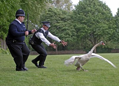 trees, grass, police, swans, Hot Fuzz, Simon Pegg, Nick Frost - desktop wallpaper