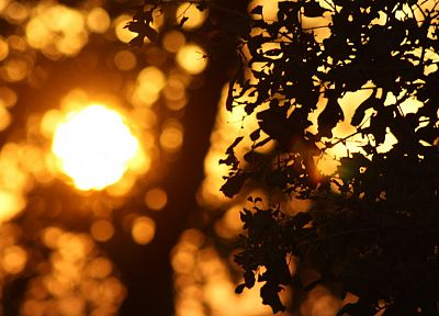 nature, Sun, leaves, bokeh, macro, depth of field - related desktop wallpaper