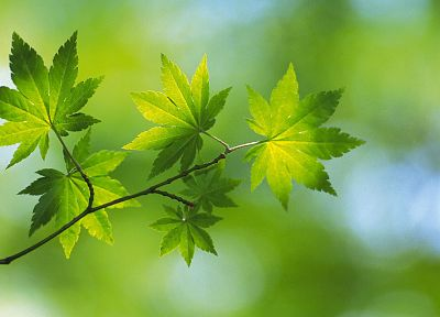 nature, leaf, leaves, plants - random desktop wallpaper