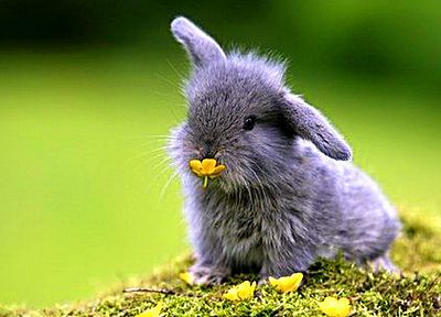 bunnies, nature, animals, baby animals - random desktop wallpaper