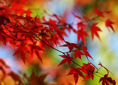 autumn, leaves - related desktop wallpaper
