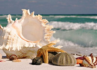 ocean, seashells, beaches - random desktop wallpaper