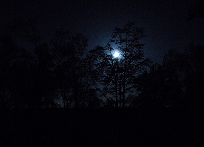 nature, trees, dark, night, forests, Moon - related desktop wallpaper