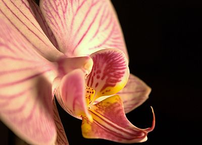 flowers, orchids - random desktop wallpaper