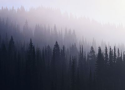 landscapes, trees, forests, mist - random desktop wallpaper