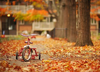 trees, autumn, streets, leaves, tricycles - related desktop wallpaper