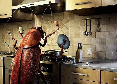 food, kitchen, bugs, cockroach - random desktop wallpaper