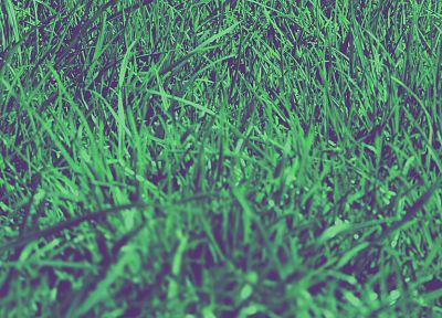 close-up, grass - random desktop wallpaper