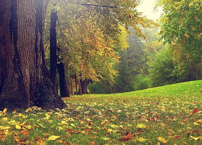 trees, autumn, grass, garden - random desktop wallpaper