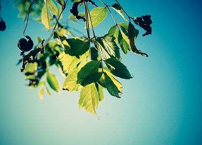 leaves, depth of field, skyscapes - related desktop wallpaper
