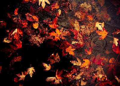 water, autumn, leaves, fallen leaves - random desktop wallpaper