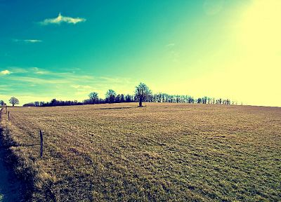 landscapes, trees, fields, sunlight, roads, skyscapes - related desktop wallpaper