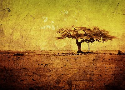 landscapes, nature, trees, savanna - desktop wallpaper