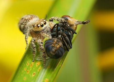 animals, insects, spiders, arachnids - related desktop wallpaper